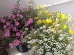 Photo of Balcony Flowers