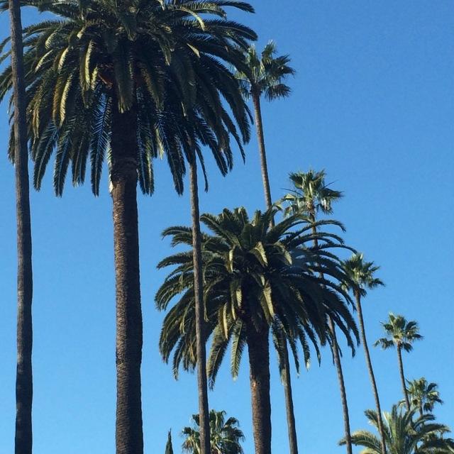 BH Palms