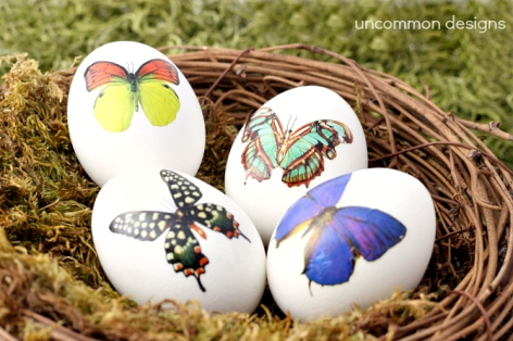 Temporary Tattoo Eggs